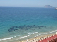 Sale · Apartment/Flat Calpe